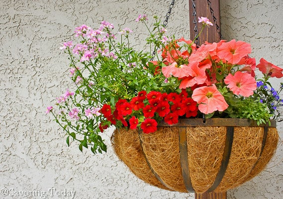 Flower Garden -- Deck Baskets (1 of 1)